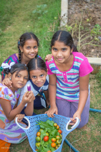 The children enjoy picking fruit, herbs and vegetables which will be used as food